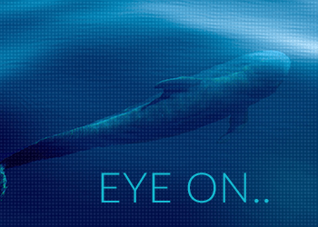 eye-on-whale-wordpress-post-feature-350x220